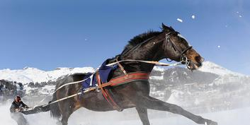 White Turf: A Very Special Racing Spectacle